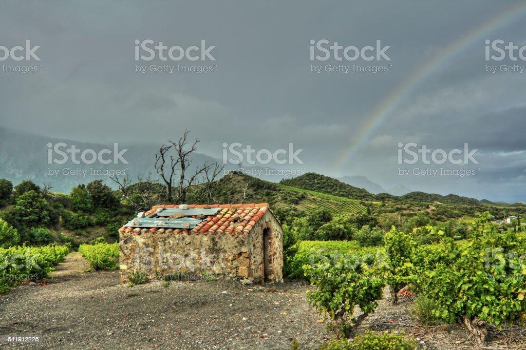 Ruined stone hut isolated in vineyard stock photo