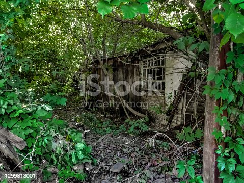 istock Ruins of an abandoned hut in the thickets in Putivl (Sumy region, Ukraine) 1299813001