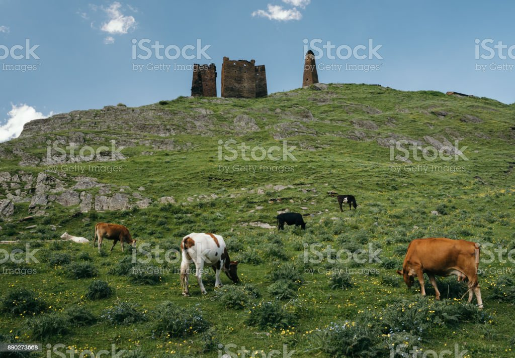 Ruins of Georgian defensive towers on a mountain hill. Landscape of Caucasus mountains with Tusheti towers at the forground in summer. Group of cows at the forground. stock photo