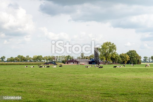 Dutch agricultural landscape with a barn, stable and tall feed silo in the background and ruminating black and white cows lying in the fresh green grass of a meadow. It is a cloudy day in summertime.