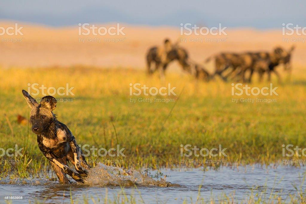 Run and splash stock photo