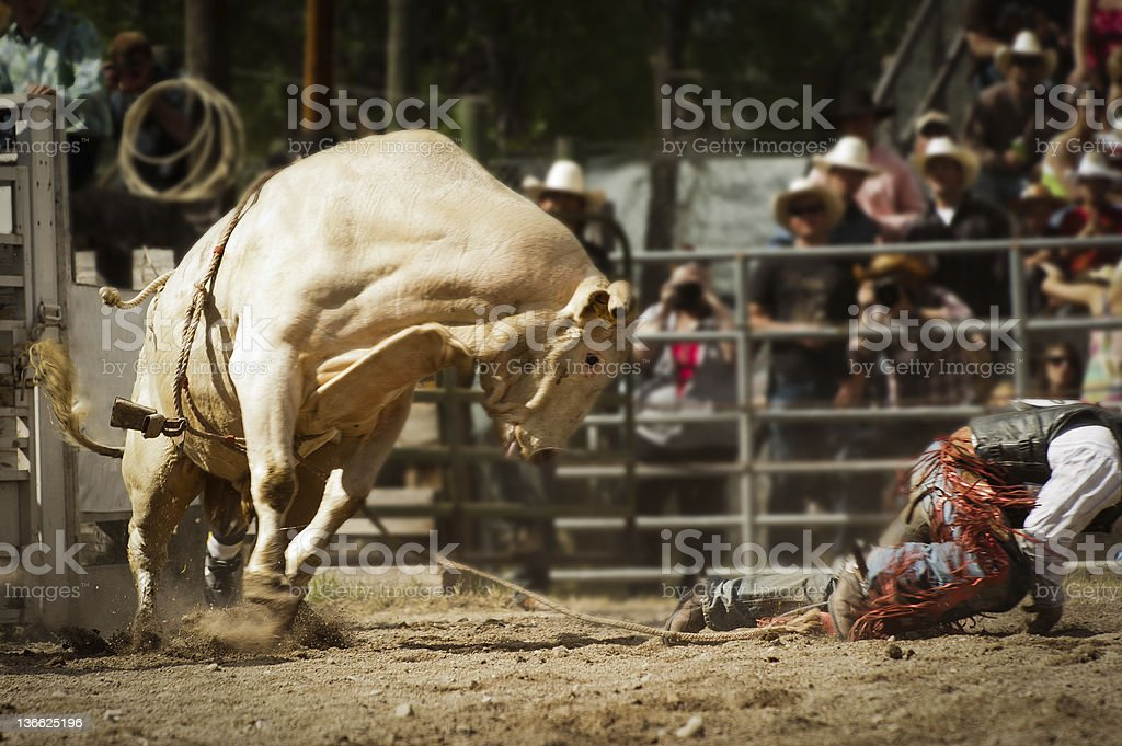 Run, I mean Crawl Cowboy stock photo