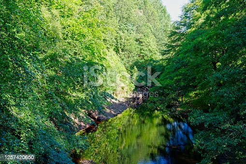 Run off water from Derwent Reservoir, Derbyshire, flows down a steep sided valley lined with trees.