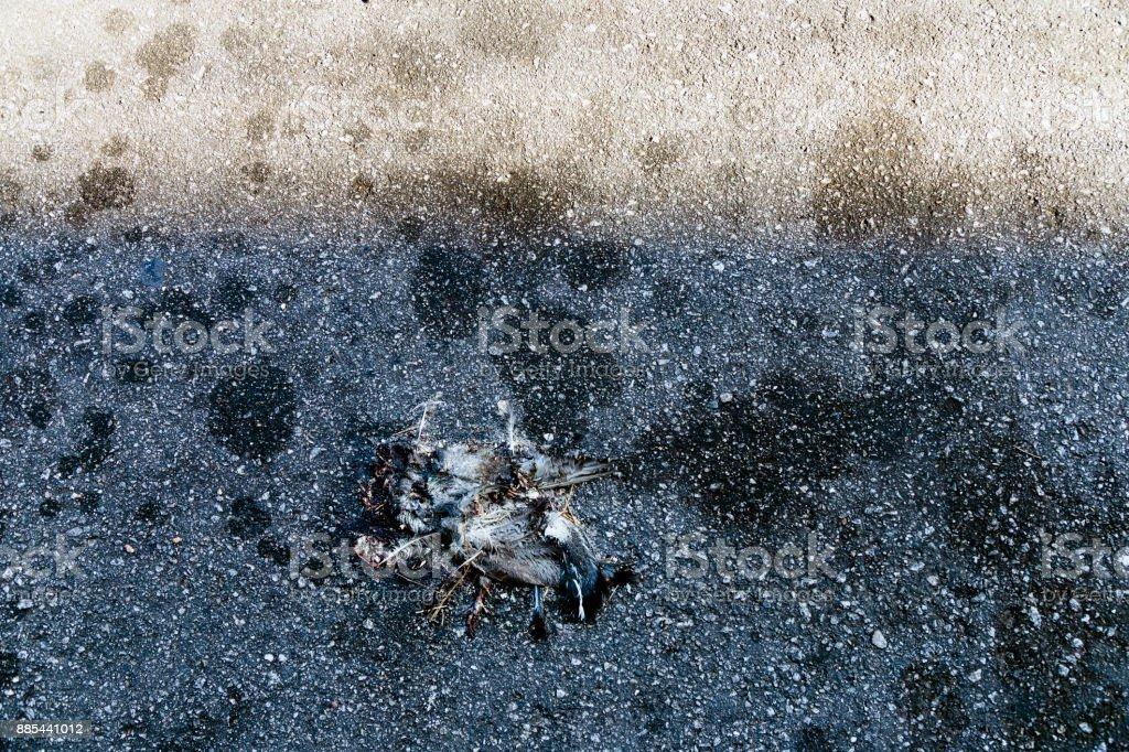 Atropelar a pomba - foto de acervo