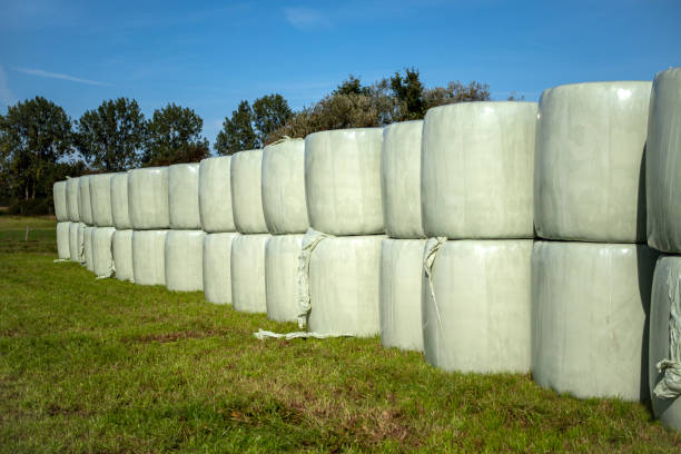 Runballs, hay bales wrapped in foil and stacked on top of each other for storage stock photo