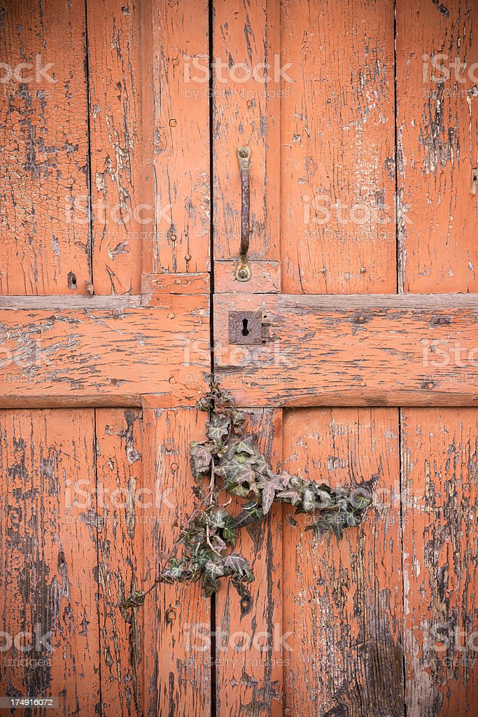 Run-down red wooden door with plant, Tuscany Italy royalty-free stock photo