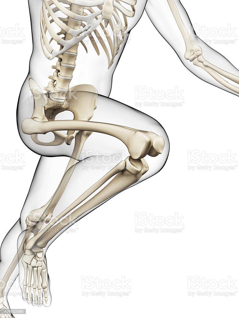 runner skeleton royalty-free stock photo