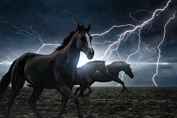 Course de chevaux noirs - Photo