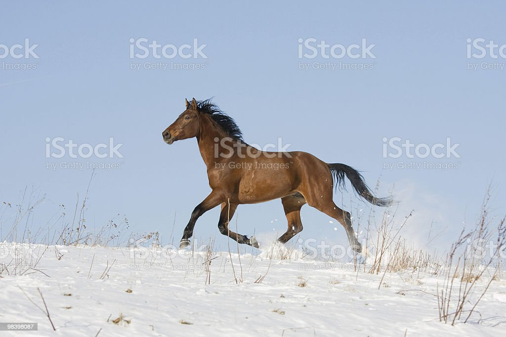 Running brown horse royalty-free stock photo