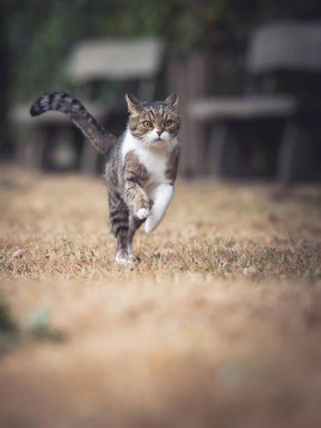 Running cat picture id1019063058?b=1&k=6&m=1019063058&s=612x612&w=0&h=mzdpmr2ol93a59prci9wymy2vazvefnc7apbpok4j2o=