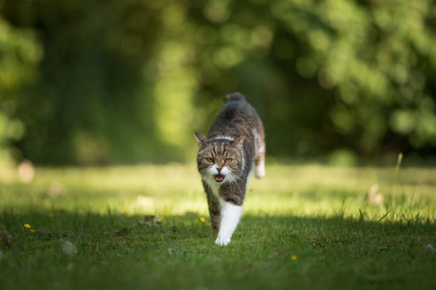 Running cat picture id1071771554?b=1&k=6&m=1071771554&s=612x612&w=0&h=duh1fmujy9jt7yjjsendyaax2fq4ajqe 3t46yse4yi=