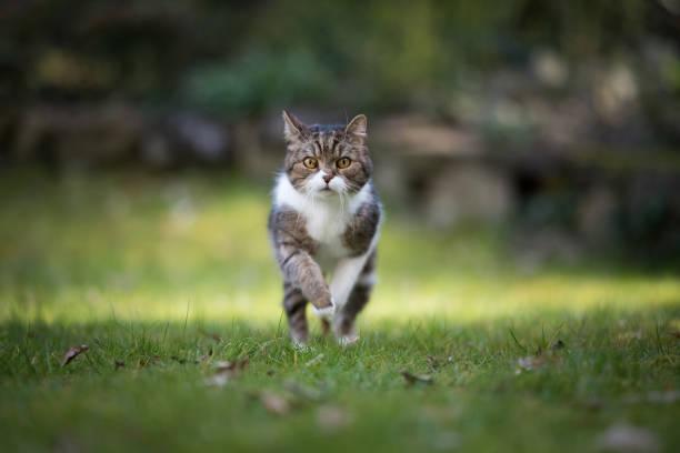 Running cat picture id1071771634?b=1&k=6&m=1071771634&s=612x612&w=0&h=wpvkfhdpz92x eqga29h1vxqefhwnz00fggatfylf38=