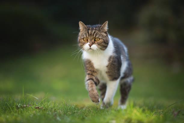 Running cat picture id1071771636?b=1&k=6&m=1071771636&s=612x612&w=0&h=gfg3mibjrgugz5uh5x1f dubkwizaua8suul0k4ncgs=