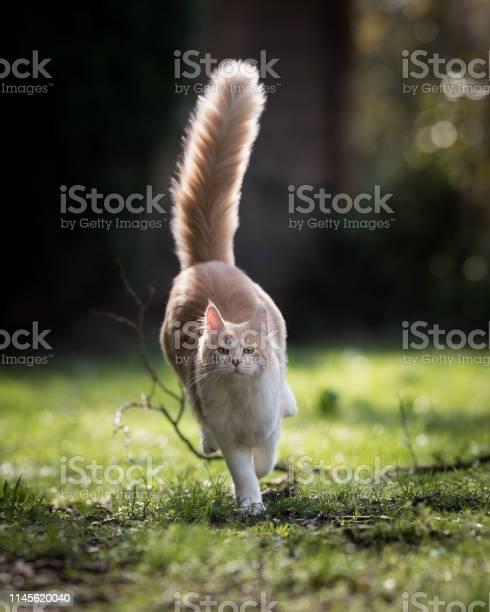 Running cat picture id1145620040?b=1&k=6&m=1145620040&s=612x612&h=ehxjlvoad3jwnixgsvq4vcspwuk1jx2ifqnycyatbrq=