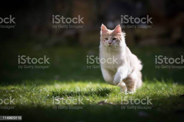 Running cat picture id1145620110?b=1&k=6&m=1145620110&s=612x612&h=pnwnzvtsomlt koww37x iuuug32 dqzkybuojgxcpw=