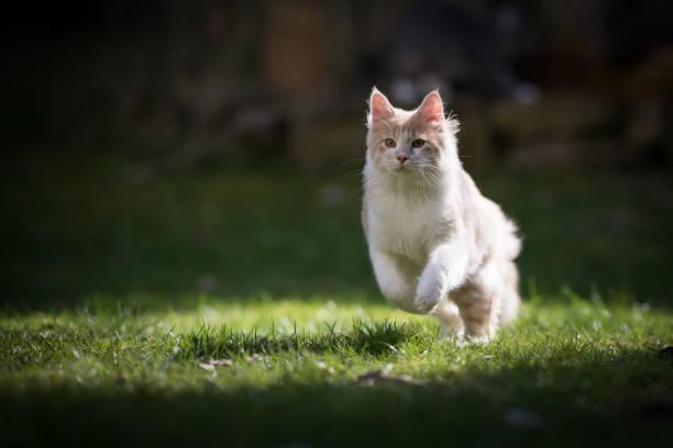 Running cat picture id1145620110?b=1&k=6&m=1145620110&s=612x612&w=0&h=4xw7gl8qcl yv4putifdo0btdjb7n3wfp5 umunumks=