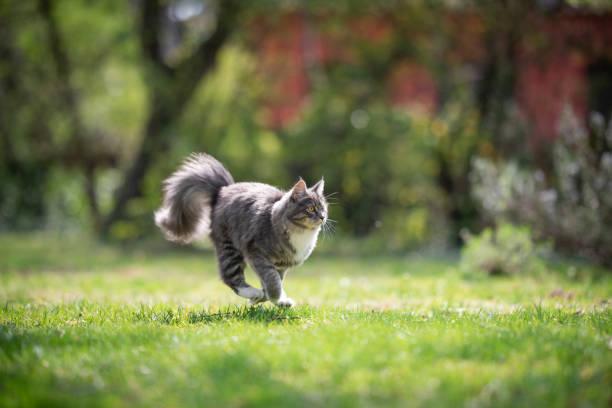 Running cat picture id1150791002?b=1&k=6&m=1150791002&s=612x612&w=0&h=vutz5tpem5fdyydild46to4bf7rd 6e7saqjr8 xyoo=