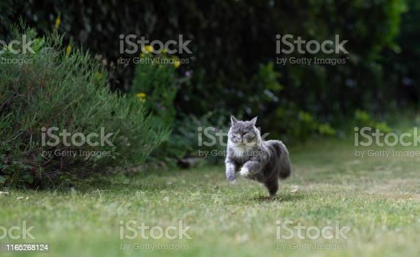 Running cat picture id1165268124?b=1&k=6&m=1165268124&s=612x612&h=p21nk1xgq3drv7gx4rydgjxn 6z jyplufvuw7ujhei=