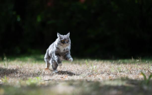 Running cat picture id1171159301?b=1&k=6&m=1171159301&s=612x612&w=0&h=fezlvwshzz72ahvb3gcnqzcypwb3kxucs4ijrkt91lu=