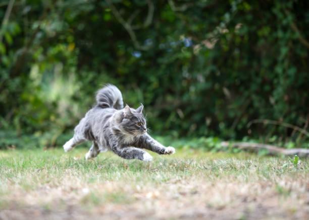 Running cat picture id1178810687?b=1&k=6&m=1178810687&s=612x612&w=0&h=tgs3mbmmhwamiqak3cg3clonracqluqrceuhtwe6loo=