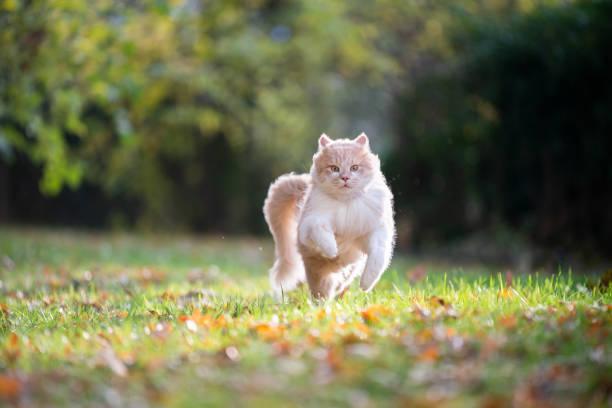 Running cat picture id1190489370?b=1&k=6&m=1190489370&s=612x612&w=0&h=gyc4iqowikyunkkl4hcekzxdda59l2yzfhqiqxp6wg0=