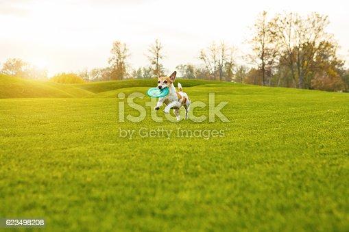 istock Running cute dog 623498208