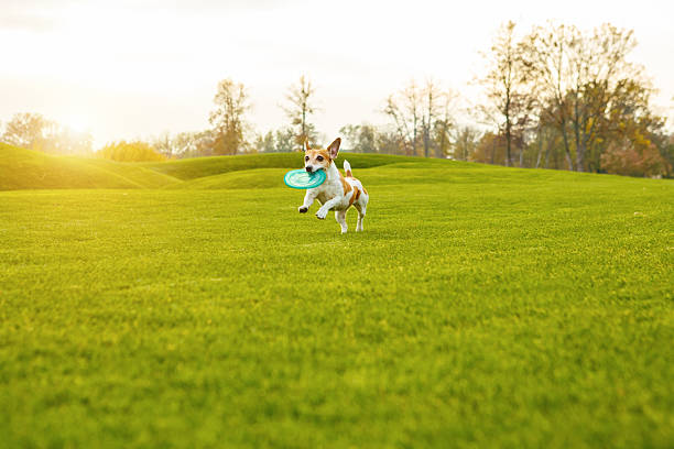Running cute dog picture id623498208?b=1&k=6&m=623498208&s=612x612&w=0&h=15dympf6txy afc7rdmwalwgsinmrekae868oyse2w8=