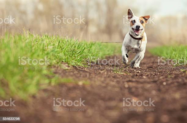 Running dog at summer picture id534633298?b=1&k=6&m=534633298&s=612x612&h=mo8wtzvnnqigsq7wbrcobroj2epblto5idwfbqeaow0=