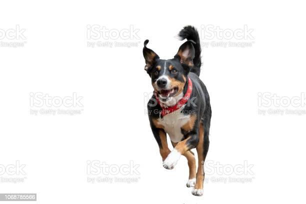 Rennender hund freigestellt picture id1068785566?b=1&k=6&m=1068785566&s=612x612&h=vpynryyiriqe zycqwc8w5fd55zsr6kwt5enbkw87so=