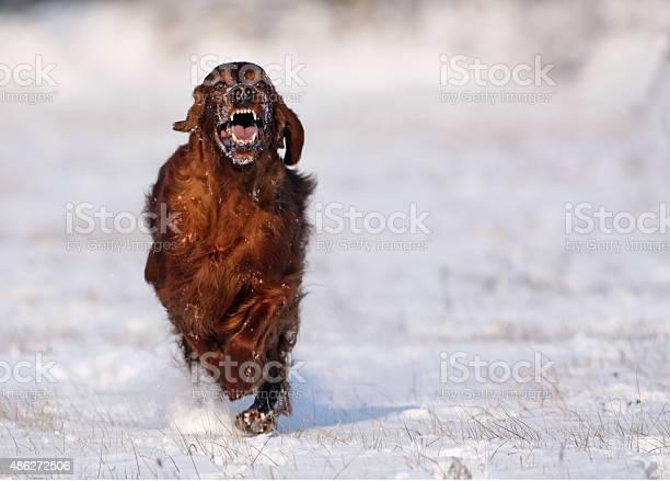 Running dog picture id486272506?b=1&k=6&m=486272506&s=612x612&h=eqsd6kl2piae7jalc4ahbtboyxitd5590kzqkkh9xpi=