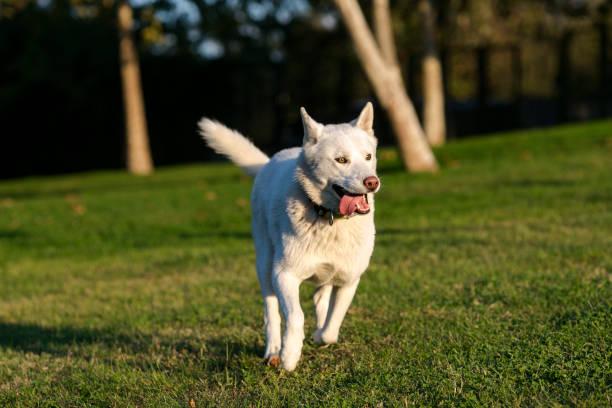 Running Dog – zdjęcie