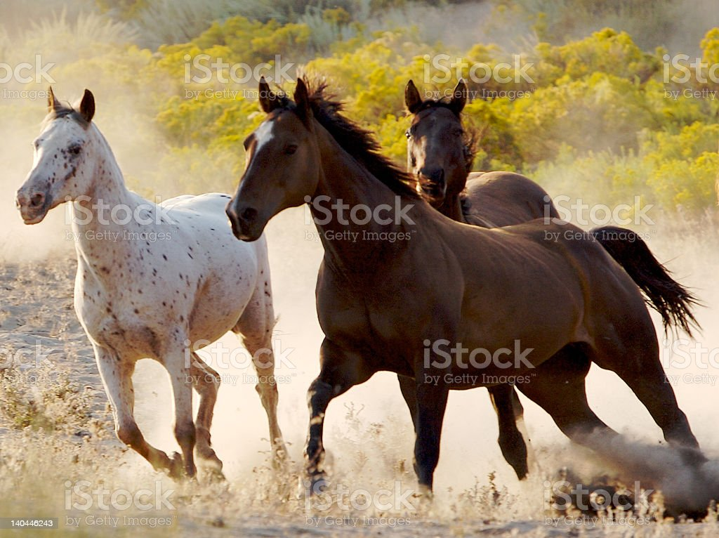 Running Free stock photo