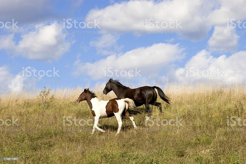 Running Free royalty-free stock photo