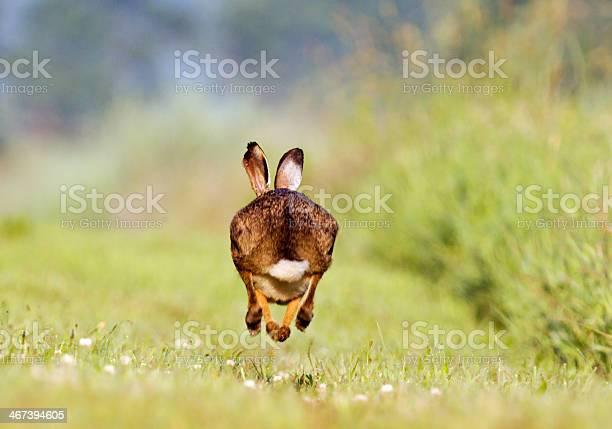 Running hare picture id467394605?b=1&k=6&m=467394605&s=612x612&h=maagtn8thjpc do cvaqp78txpecyzhvv3xtclbgy6y=