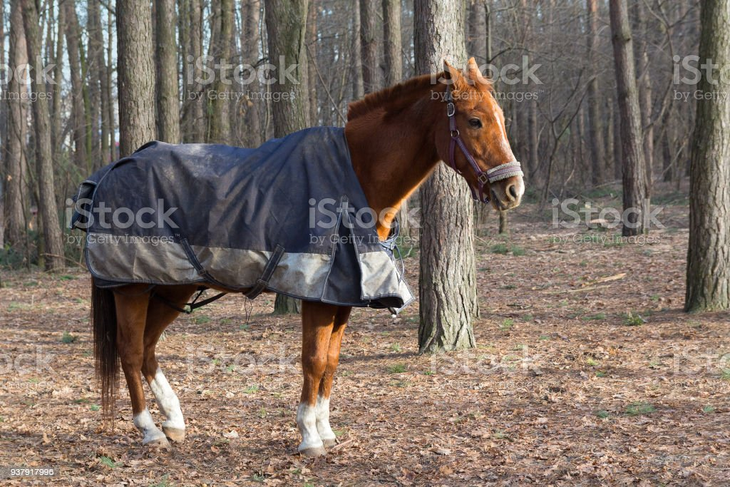 Running Horse In A Blanket In The Park Animals Stock Photo Download Image Now Istock