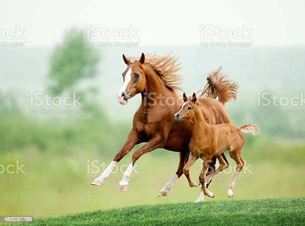 Running horse in meadow summer day picture id483297786?b=1&k=6&m=483297786&s=612x612&h=wd0zgc9ase2w11mhqrrjc7ywhnx0ggpludh9riz5 as=