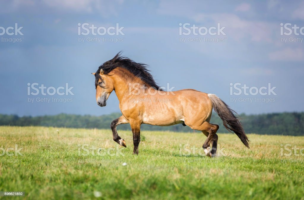 Running horse. stock photo