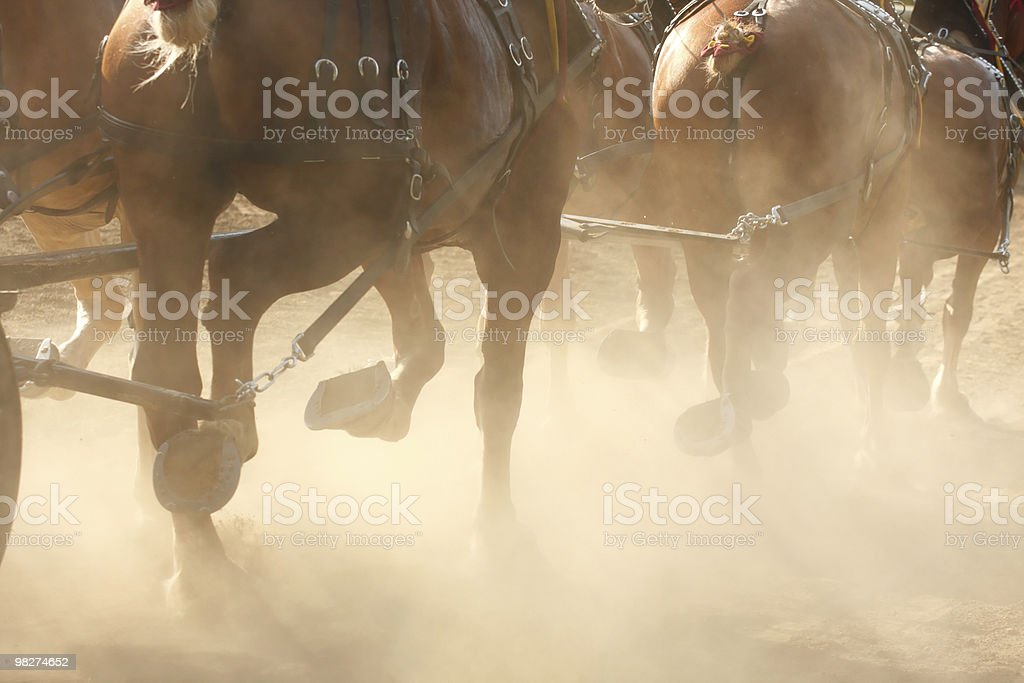 Running Horses royalty-free stock photo