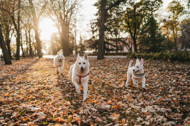 Running in autumn park stock photo