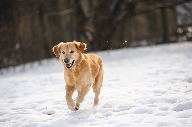 Running in snow stock photo