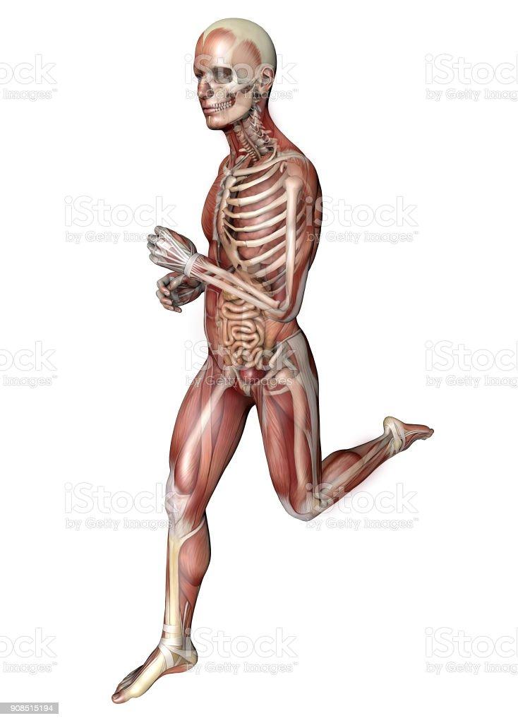 Fotografía de Ejecutan A Hombre Cuerpo Humano Sistema Muscular ...