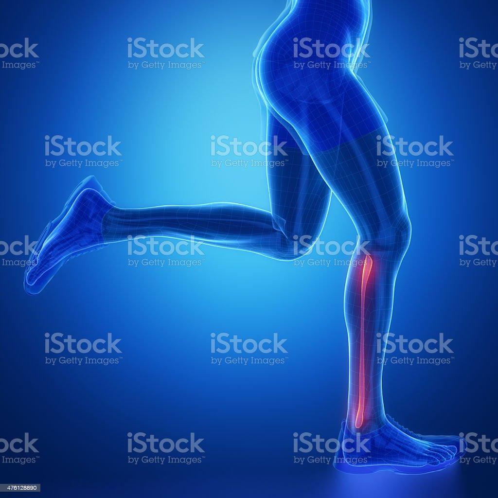 FIBULA - running man leg scan in blue stock photo