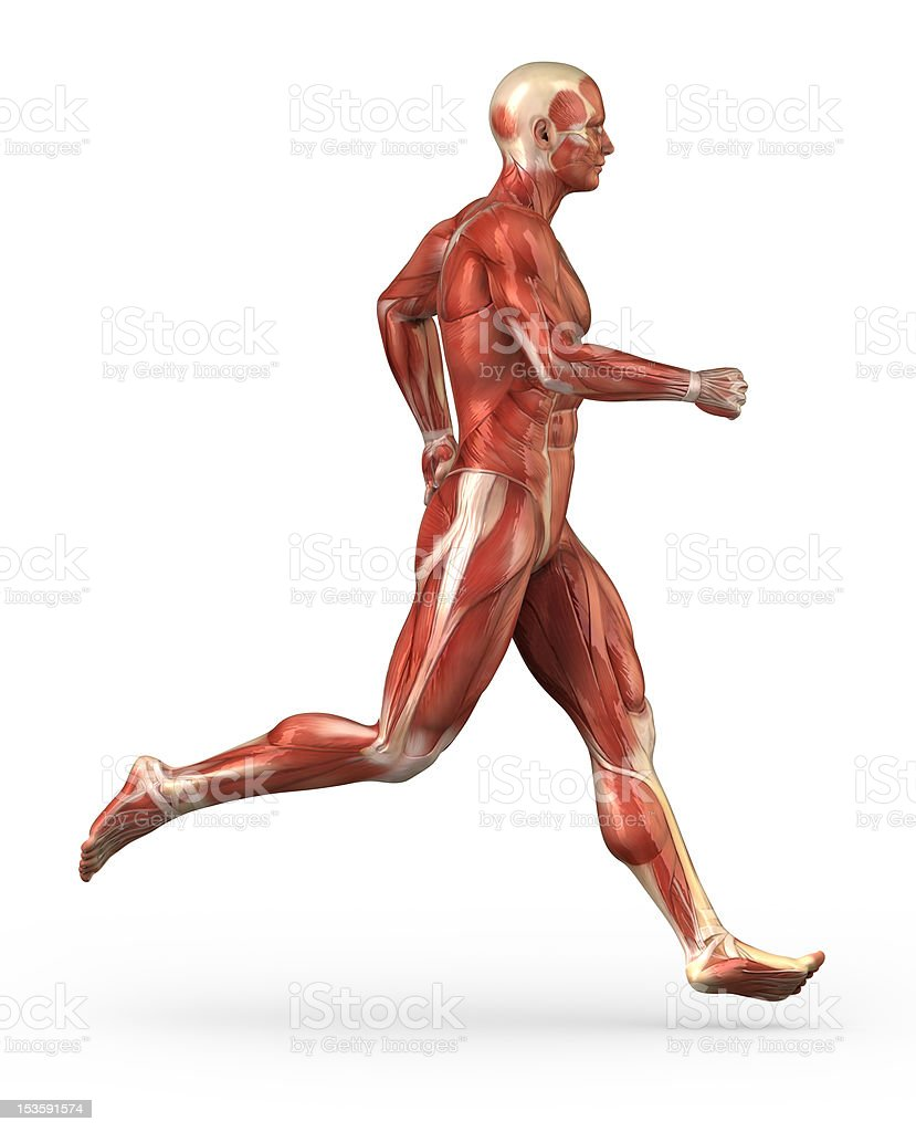 Running man muscular system stock photo
