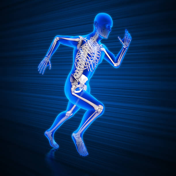 running man x-ray with clipping path - human skeleton stock photos and pictures