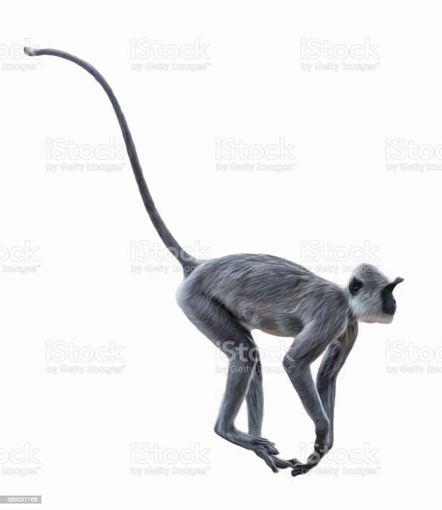 Running monkey stock photo