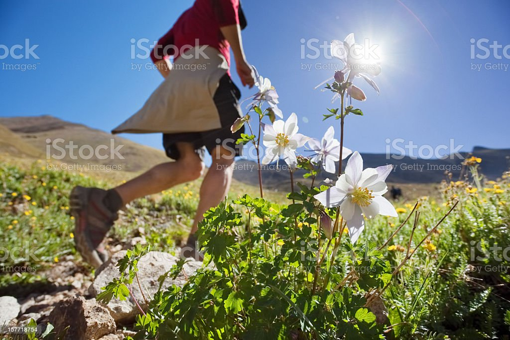 running mountain flower landscape stock photo