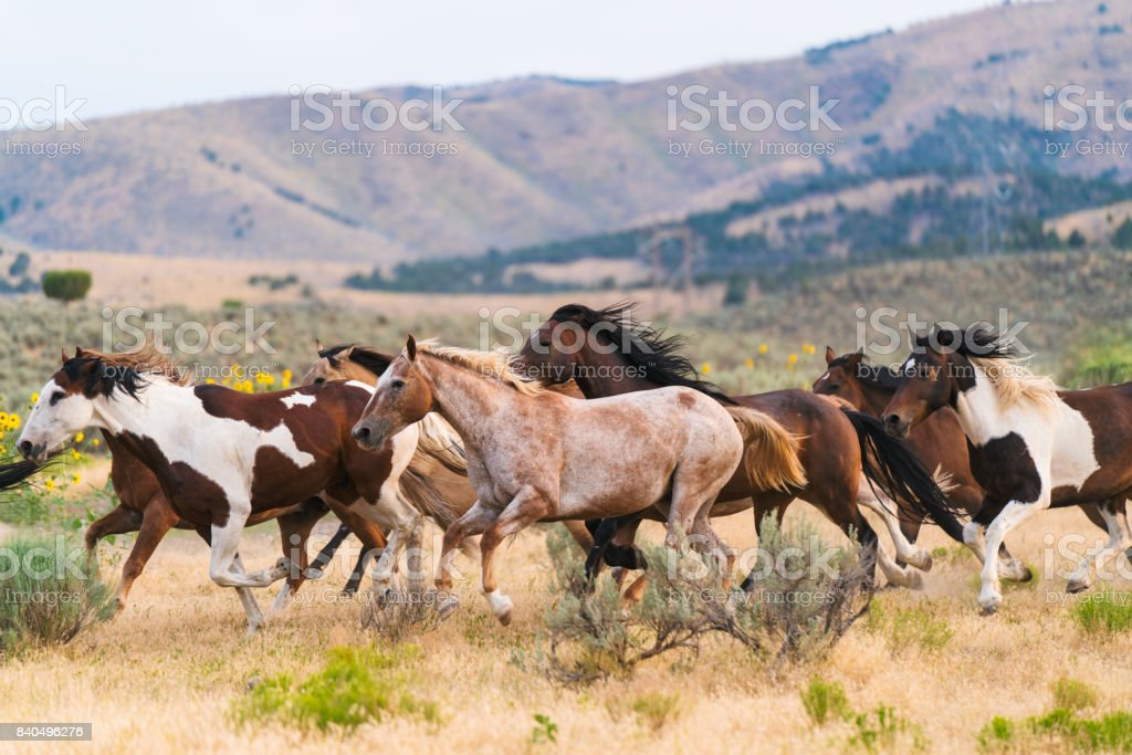 Running of the horses stock photo