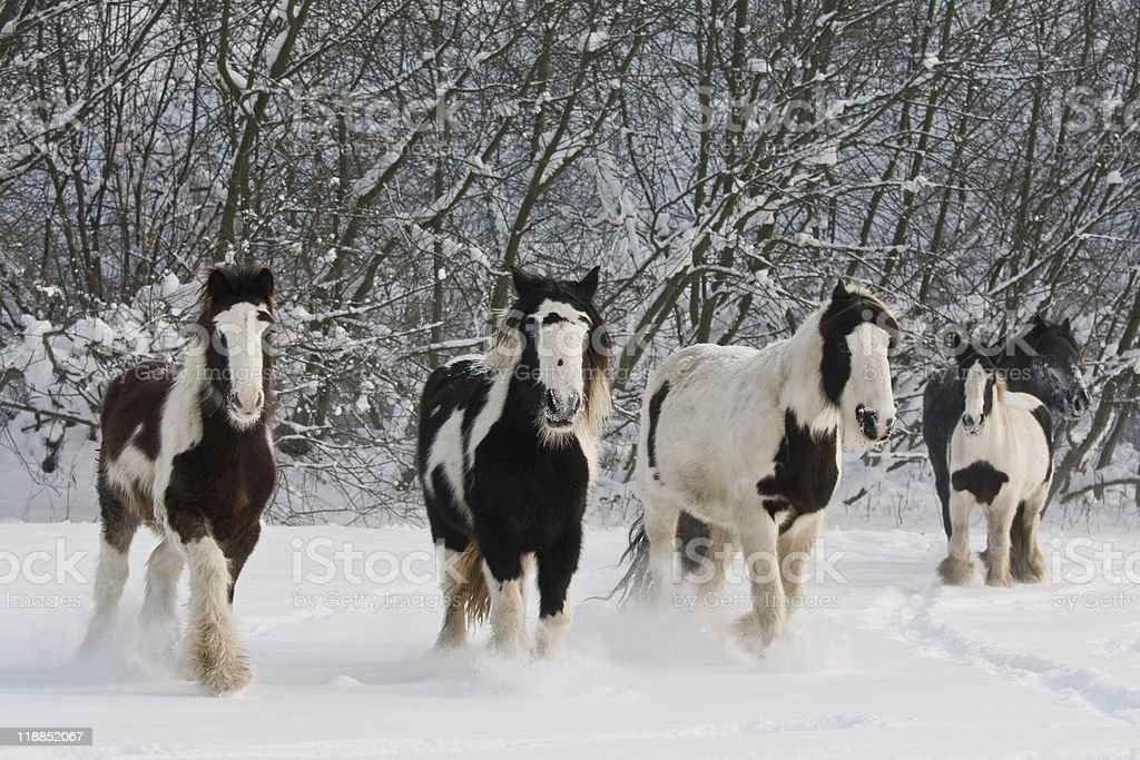 spotted horses sparknotes