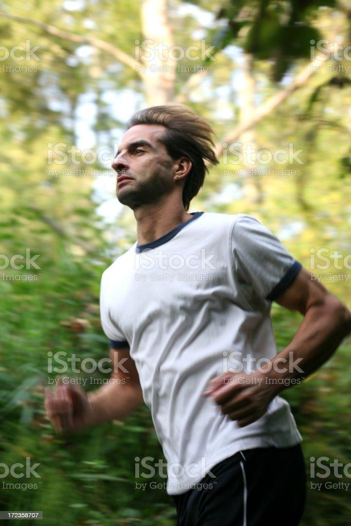 Corriendo a través de la madera. foto de stock libre de derechos