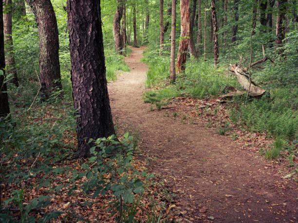 Running Trail Through the Woods in Massachusetts stock photo